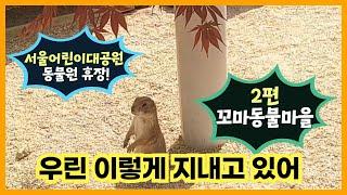 서울어린이대공원 동물원 휴장 이야기_2편 꼬마동물마을썸네일