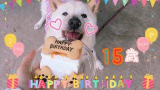 『柴雑種犬』2019.5.14みーくん15歳のお誕生日会🎂(説明欄見てね) thumbnail