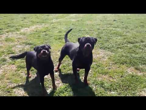 Cayman Suny Day's and his girlfriend Baby Trust and Power from Romania