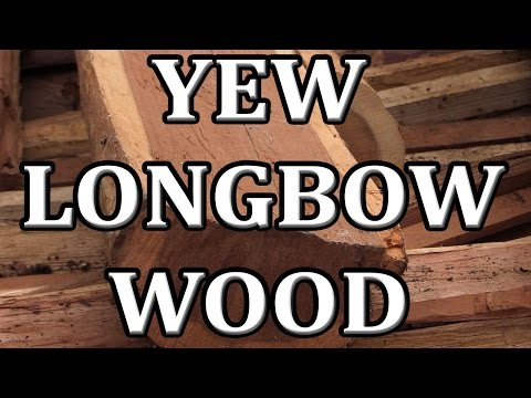 Finding Bow Staves, Yew wood for Longbow making discovered