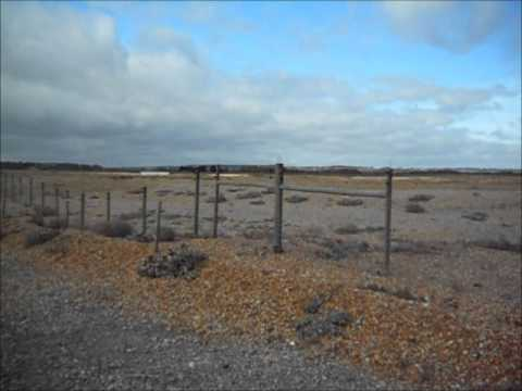 my trip to rye harbour 11th october 2011 part 2