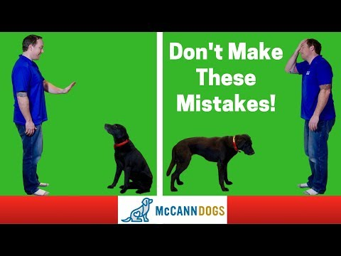 """Teaching A Dog To """"Stay""""- 3 Common Mistakes - Professional Dog Training Tips"""