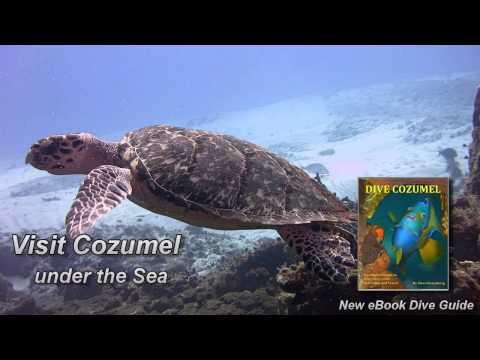 Dive Cozumel - A new eBook Dive Guide