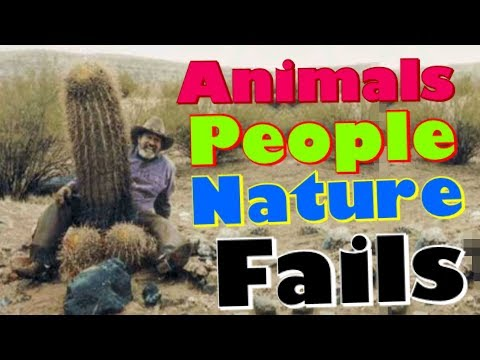 Animals People and Nature Fails 2017 | Funny Fail Compilation