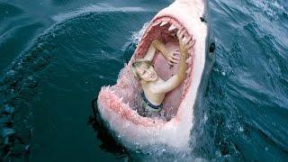 Одно из самых Жутких нападений акул. Апрель 2016  Just Funny(Лучшие моменты, случайные из жизни людей и их питомцев да и всей окружающей среды , здесь все для вас люди,..., 2016-04-14T17:37:43.000Z)