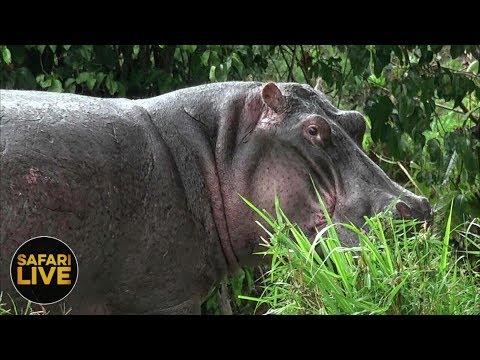 safariLIVES: Episode 27
