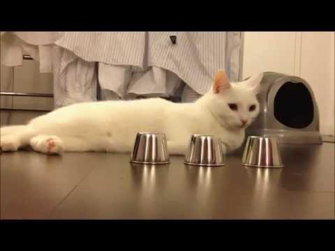 Đây đéo phải con mèo nữa rồi :))