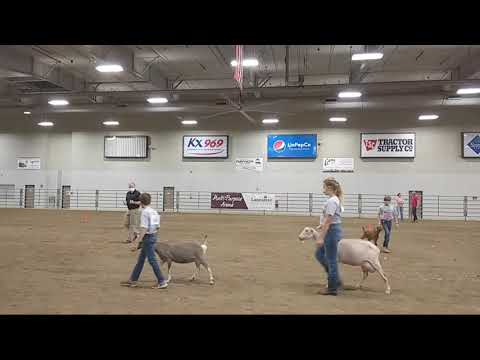 4-H Dairy Goat Show at 2020 Lancaster County Super Fair