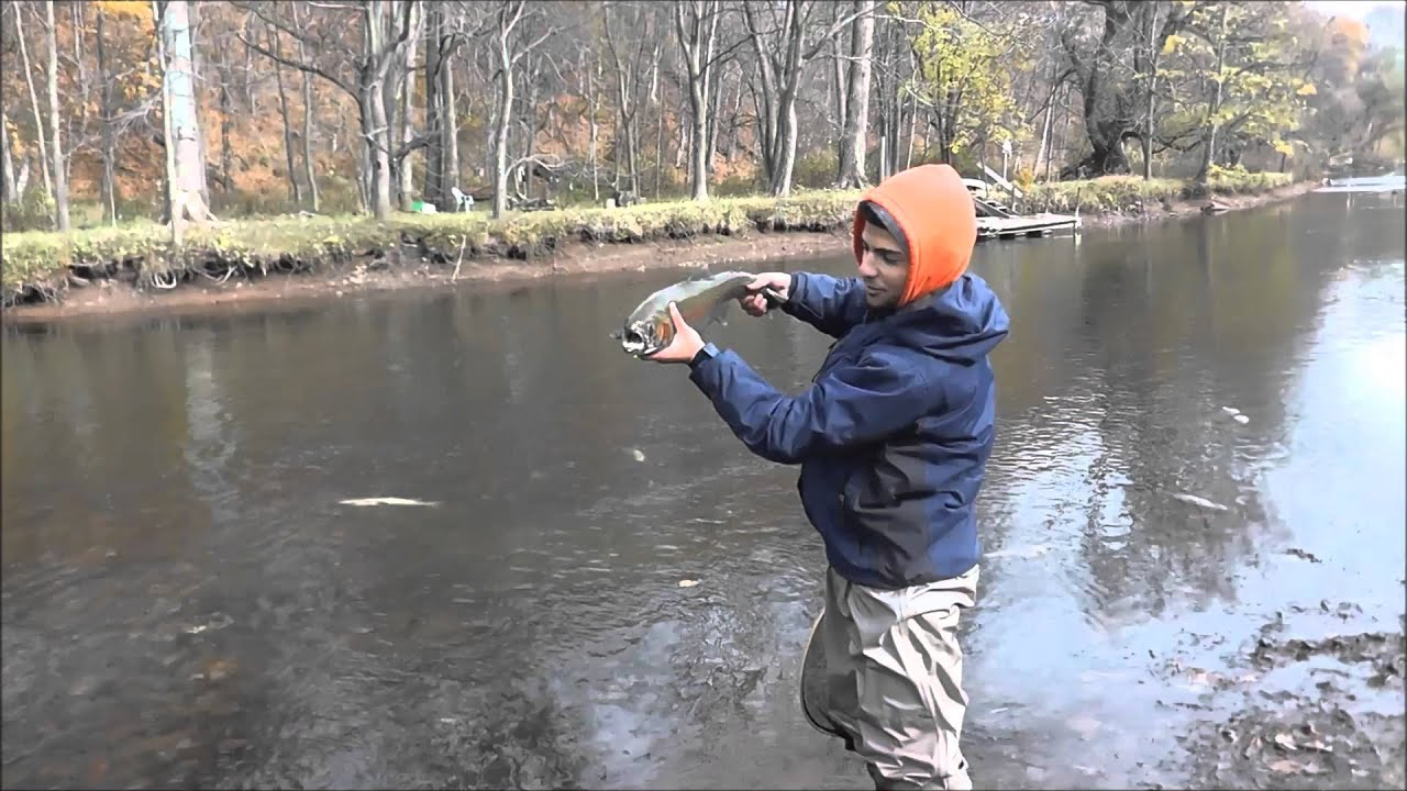 Oak orchard river steelhead browntrout fishing 2014 for Oak orchard fishing report