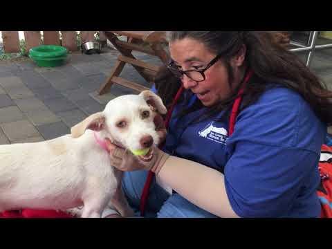Terrier Mix Puppies! Meet Freeman and Priscila