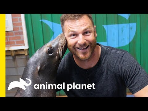 Hanging Out With Seals and Sea Lions at Georgia Aquarium | Animal Bites with Dave Salmoni