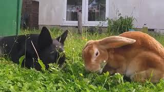 Приколы с котами видео 2019 - Смешные животные МатроскинТВ