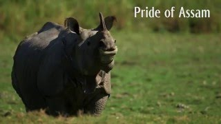 The Challenge of Poaching: co-existence of Kaziranga Park and the effiency of Tea Plantation