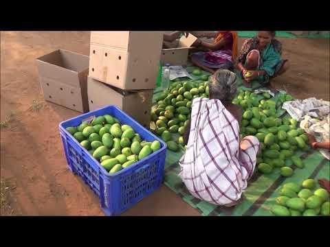 Farmer Producers Organisation for fruits & vegetables.