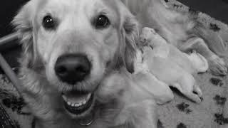Het verhaal van een puppy deel #1