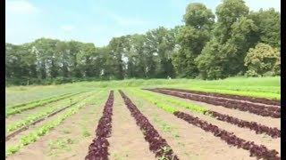 Une ferme collective pour favoriser l'achat local