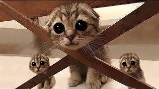 Cute Cats And Funny Animals Episode#6, Smile in these tough times