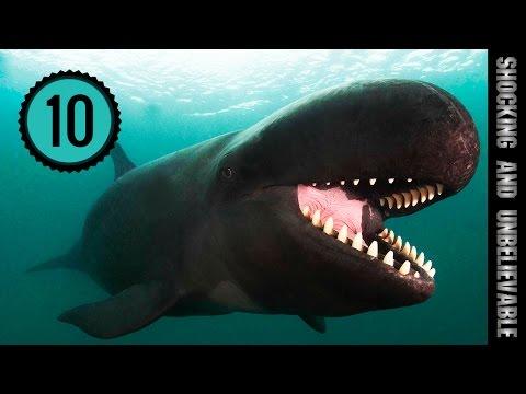 Вопрос: Виды китов Какие бывают киты?