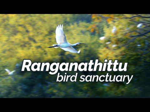 Ranganathittu | A haven for migratory birds | Pakshidhama