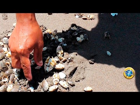 Sacando Pulgas de Mar para PESCA | Taking fishing bait