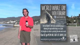 Celebrating World Love For Dolphin Day & World Whale Day