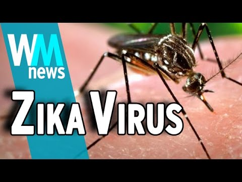 Top 10 Need To Know Zika Virus Facts