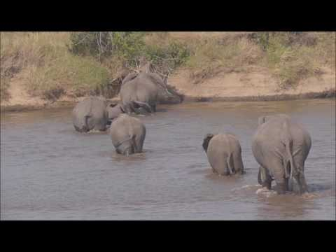 Mara river crossing 2