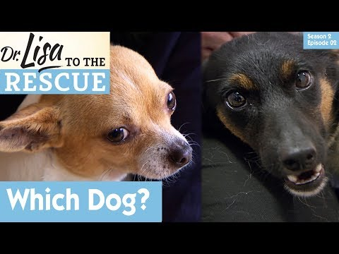 🐶 Which Dog To Choose? | S02E02 |  Dr Lisa to The Rescue