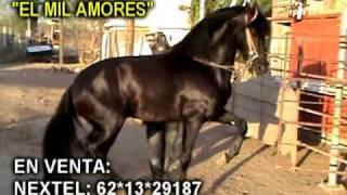 """Caballo """"El Mil Amores"""" En Venta"""
