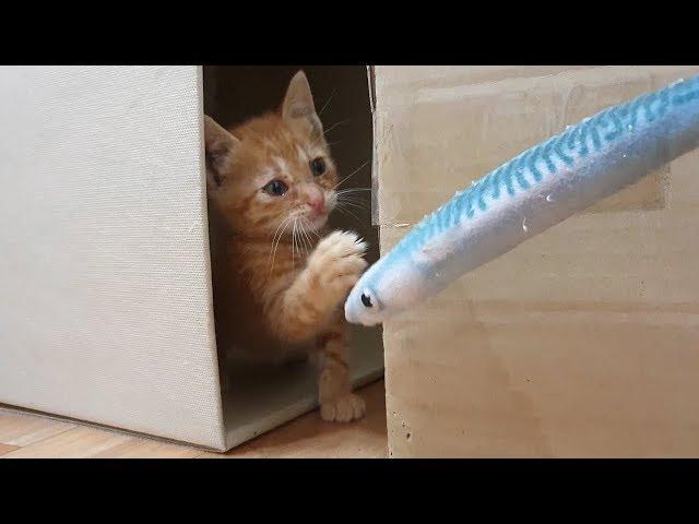 냥줍 2일차! 빠르게 적응하는 아기고양이
