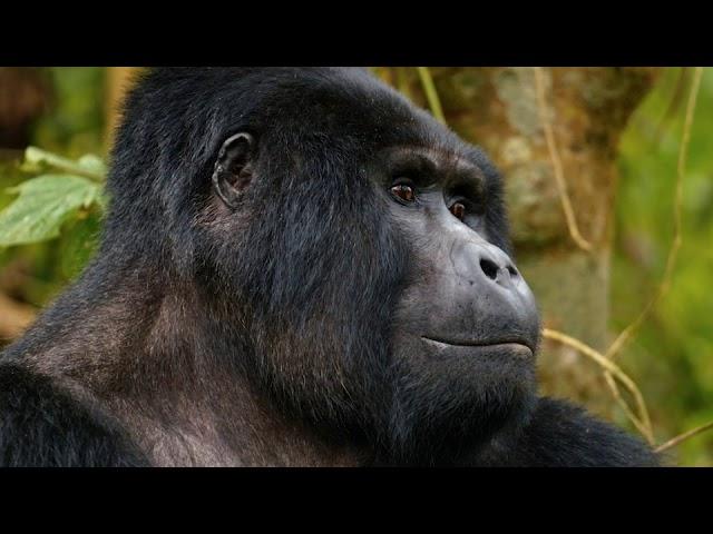 Wild Uganda: Perils in Paradise