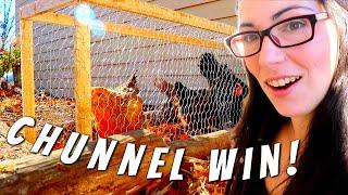 My Backyard Chickens LOVE IT!!!   Homestead Dreaming