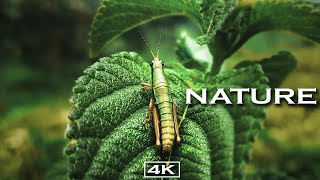 Nature in 4K
