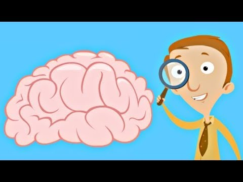 Human Brain Facts For Kids Structure And Function Video Youtube