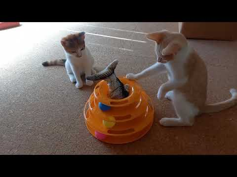 Cute & Funny Cats : Kittens