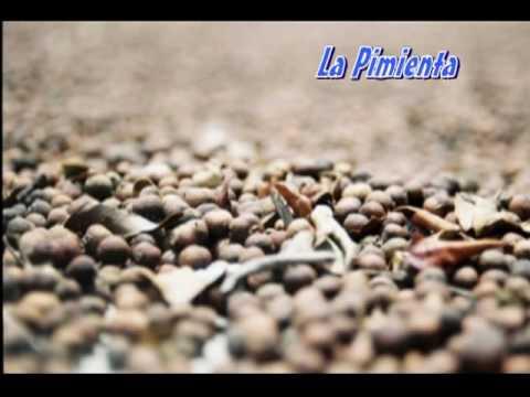 El Copainalteco.mpg
