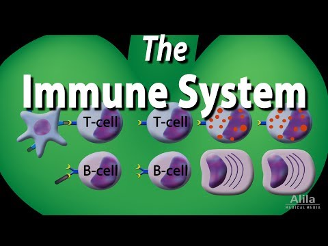 The Immune System Overview, Animation