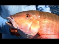 Mutton Snapper Fishing Tip - Bite The Heads Off Your Live Baits