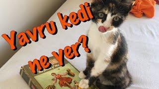 Yavru kediler ne yer? Sokak kedilerinin evimizde ilk günü