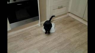 MY CAT PEE'S ON A POTTY!