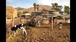El fantasma - La historia de un ranchero (corridos)