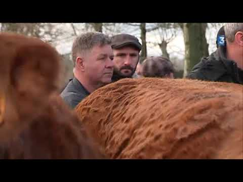 LUBERSAC SELECTION ANIMAUX DEPART POUR SALON AGRICULTURE