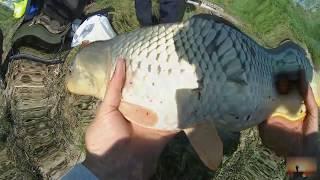 Рыбалка на Дону. Бешенный клев сазана на кукурузу. Рыбалка 2018