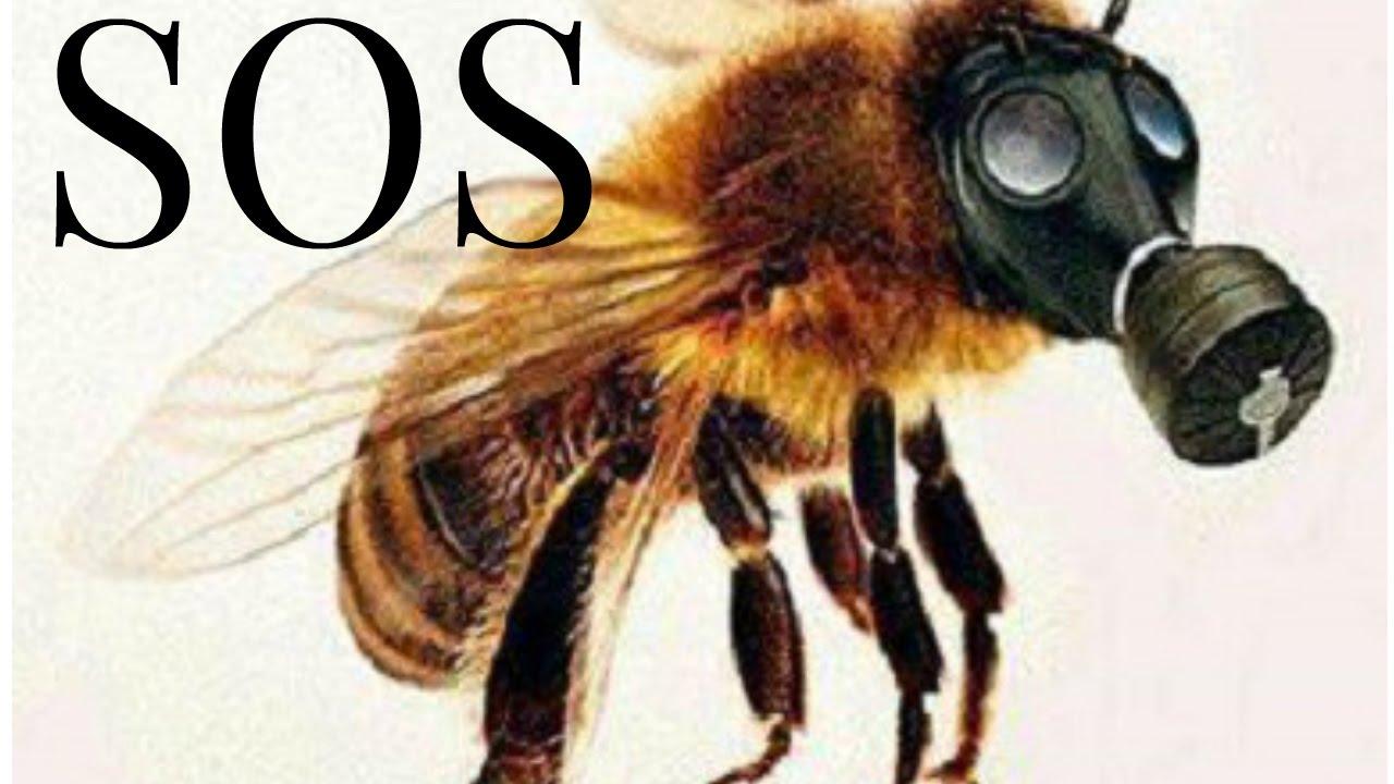 abeilles en voie de disparition youtube. Black Bedroom Furniture Sets. Home Design Ideas