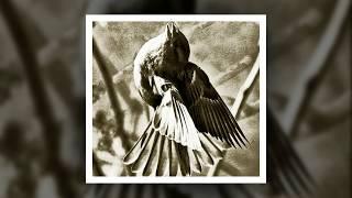 Очень красивая легенда о птице!!!
