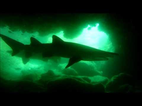 Plongée sous-marine en Afrique du sud (HD)