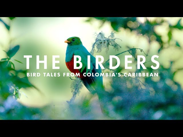 THE BIRDERS | Bird tales from Colombia's Caribbean.