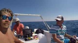 Lahoz Yazılı Orkinos ve Balon balığı avı AVmarketi