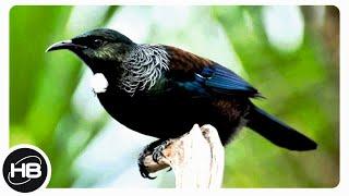 10 Самых Умных и Говорящих Птиц в Мире