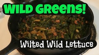 Cooking Wild Spring Greens: Wilted Wild Lettuce
